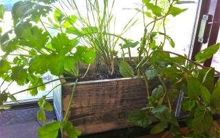 Grow an Indoor Herb Garden and have fresh ingredients even in winter.