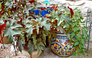 Prepping houseplants for winter