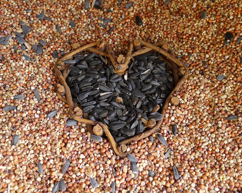 A heart of seeds to attract wild birds to garden.