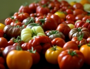 Patio tomatoes and other varieties to enjoy