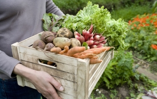 Carrots, beets and potatoes are available if you grow foods in fall and winter.