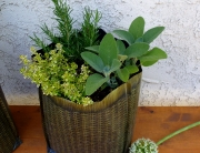 herb garden with rosemary, sage and thyme, growing in hula planter