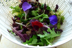 salad greens and edible pansies in white colander
