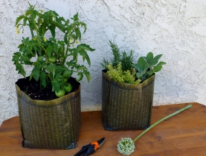 Patio tomatoes and mixed herb garden in Hula planters