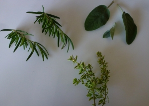 cut pieces of rosemary, sage and thyme from herb garden.