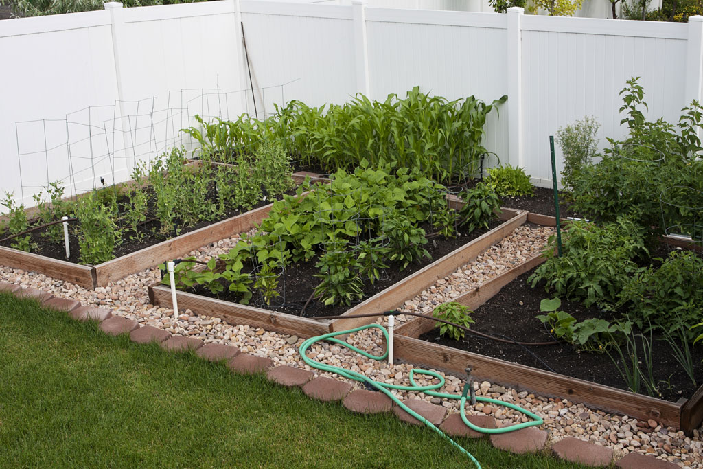 Five ways to save water in gardens sanctuary soil for Watering vegetable garden