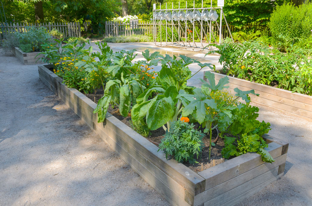 Free Gardening Advice For Raised Beds Like These Shown.