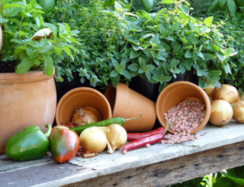 Free Gardening Advice to Get You Growing