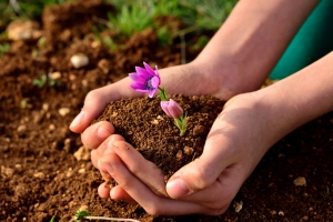 Always ask about the ingredients when buying bulk soil