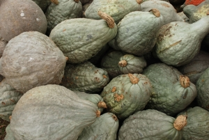 Blue Hubbarb winter squash is a great food for fall and winter meals.