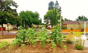 sunflowers at lull elementary kitchen community