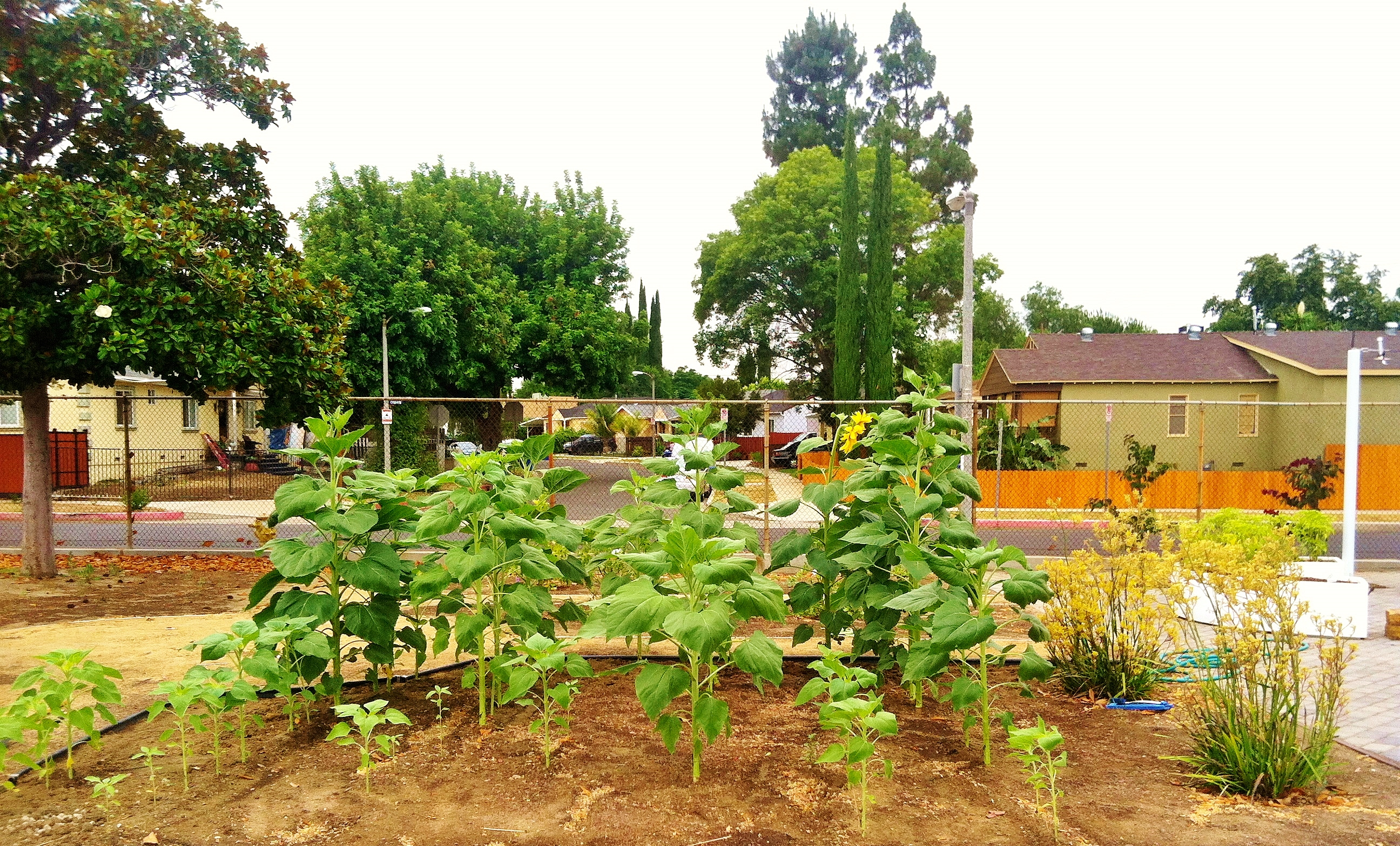 Kitchen Community Connects Kids To Gardening Sanctuary Soil